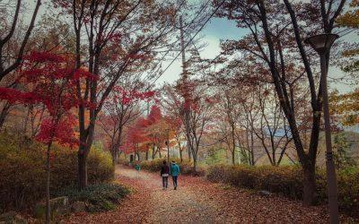 Where to Enjoy an Awesome Autumn in Korea