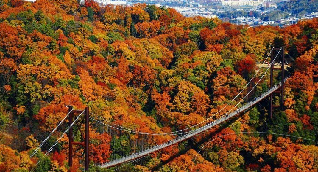 Osaka Autumn