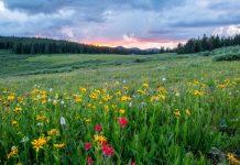 dreamy spring destinations