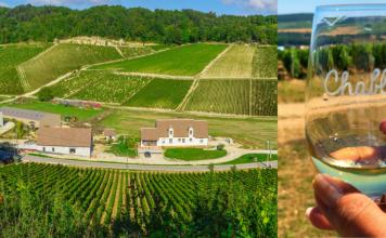 vineyard-wine-glass