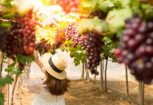 woman-vineyard-grapes