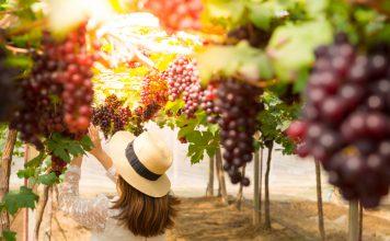 woman-vineyard-grapes